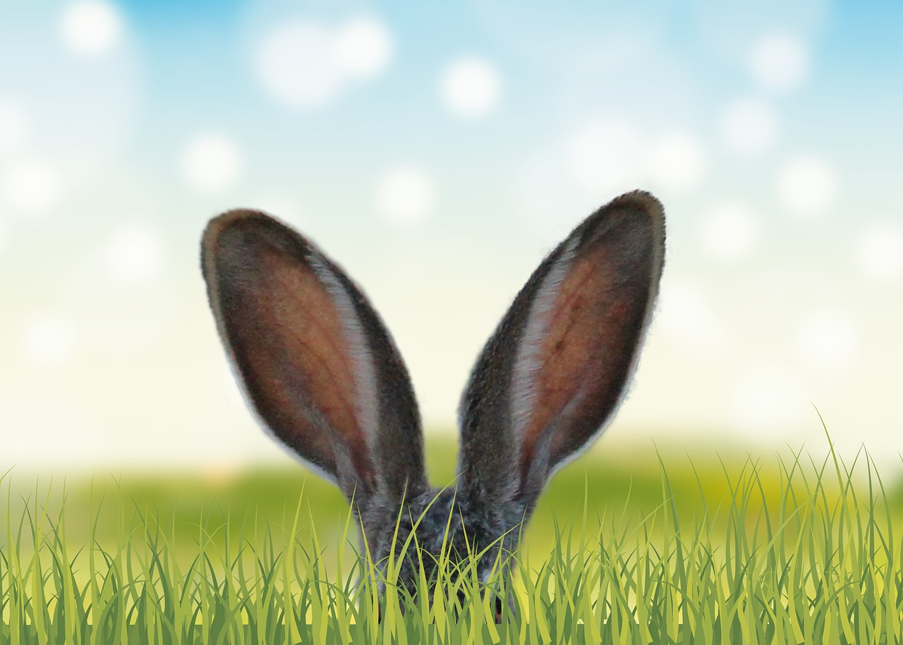 ウサギの耳の画像